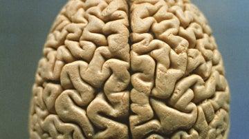 Pon a prueba tu cerebro