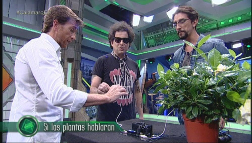 Las plantas musicales