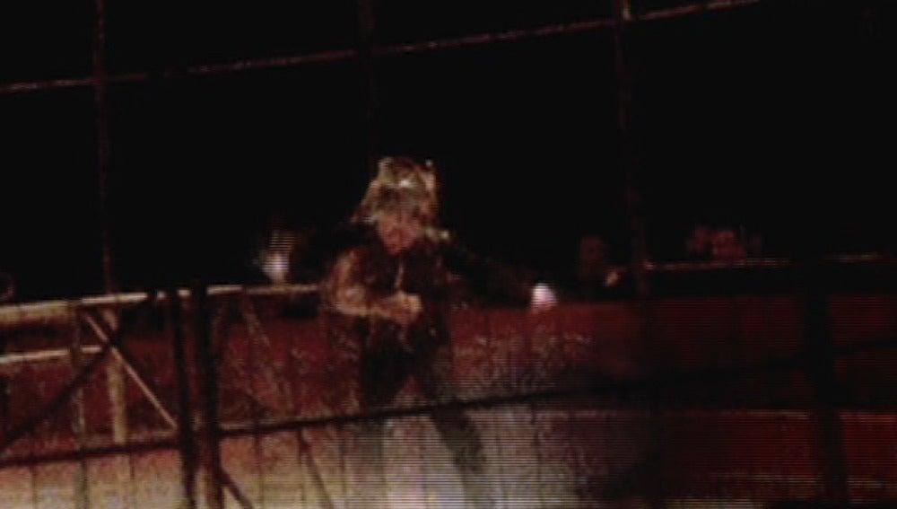 Agresión de un tigre al domador en Madrid
