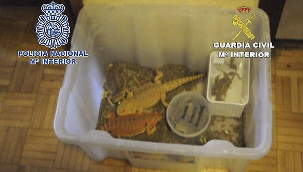 Reptiles rescatados por la Policía