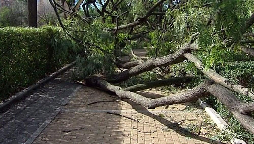 Árboles arrastrados por el temporal en Andalucía