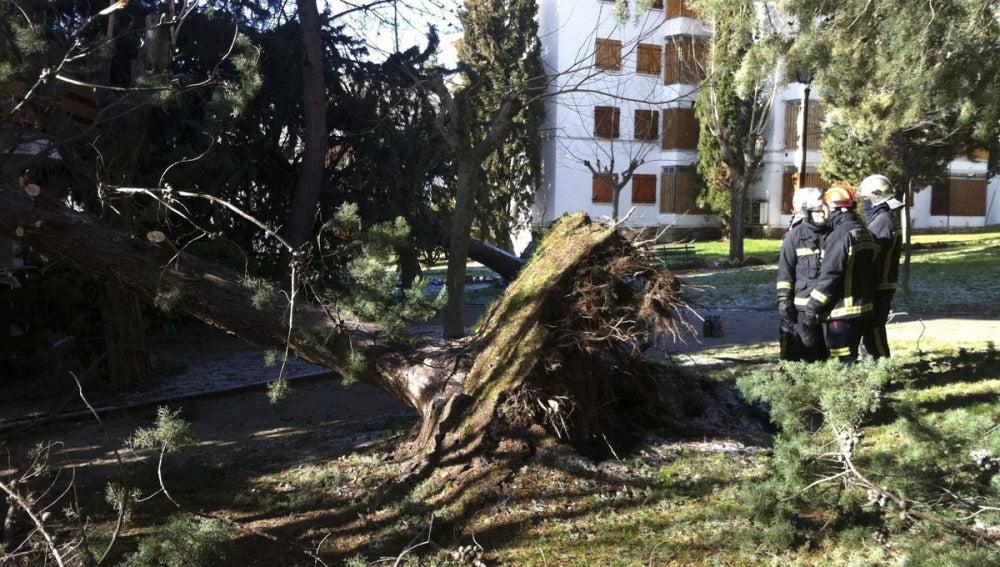 El viento arranca árboles