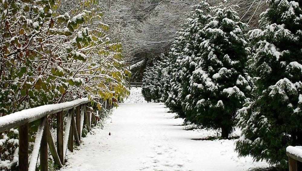 Paseos por la nieve