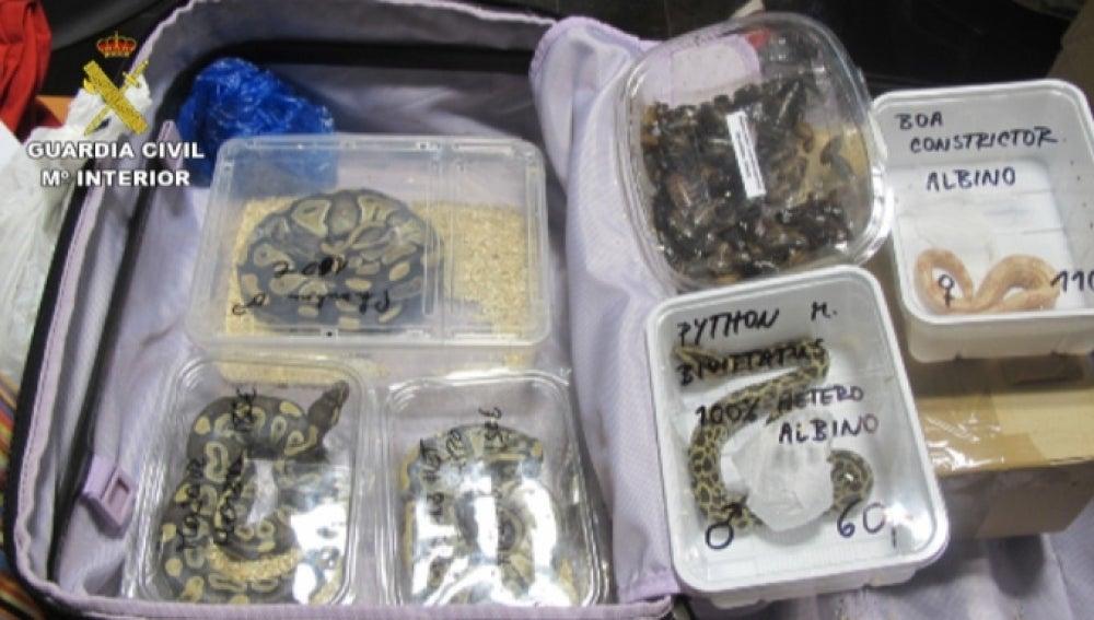 Decomisan numerosos animales exóticos facturados en maletas en Las Palmas