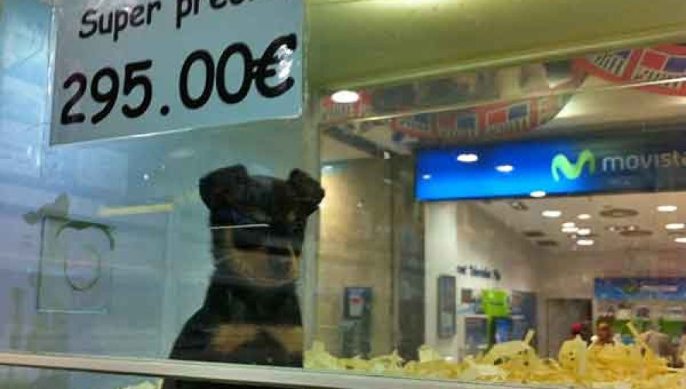 Un perro, a la venta en una tienda