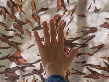 Una plaga de mariposas invaden la cúpula