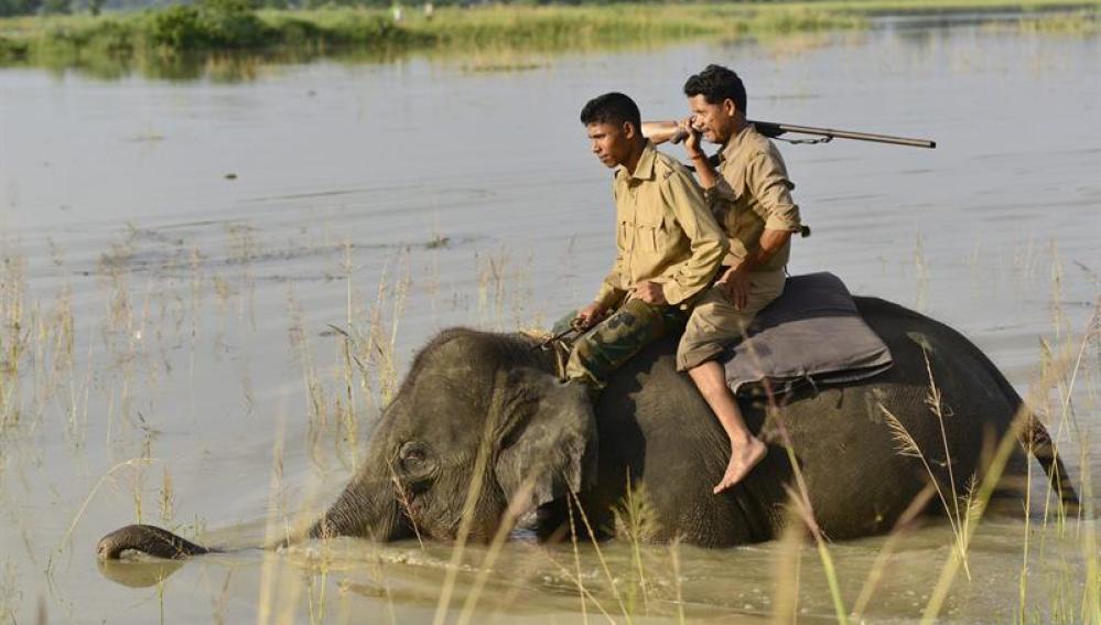 Un elefante en medio del agua