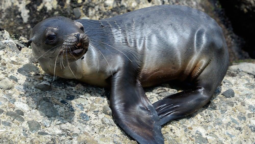 La tuberculosis se extendió a los seres humanos en África desde las focas y los leones marinos