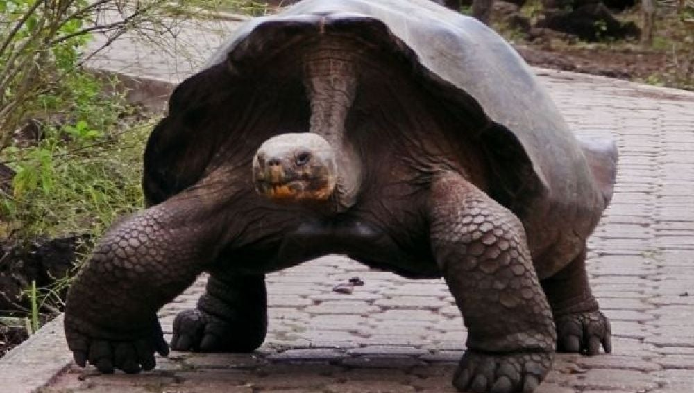 La famosa tortuga, Pepe, el misionero
