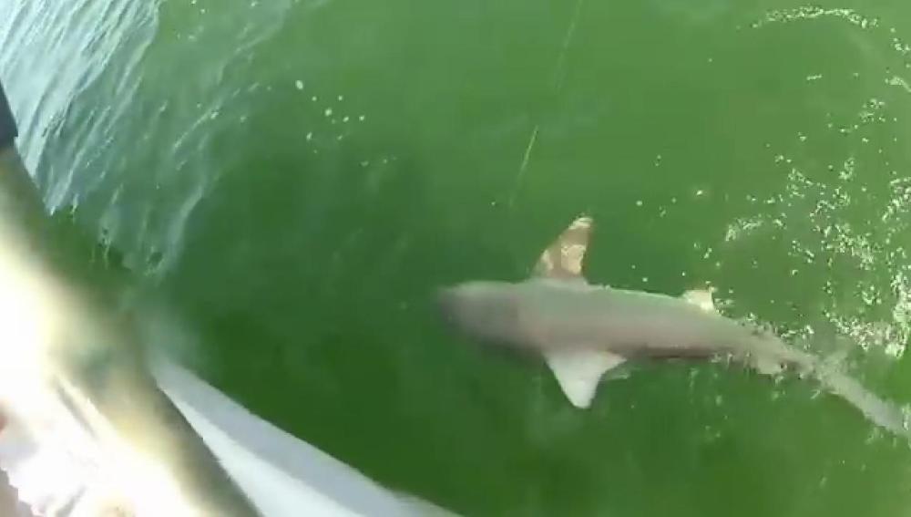 El vídeo del ataque a un tiburón triunfa en Internet