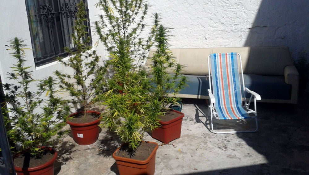 Uruguay legaliza el cultivo doméstico