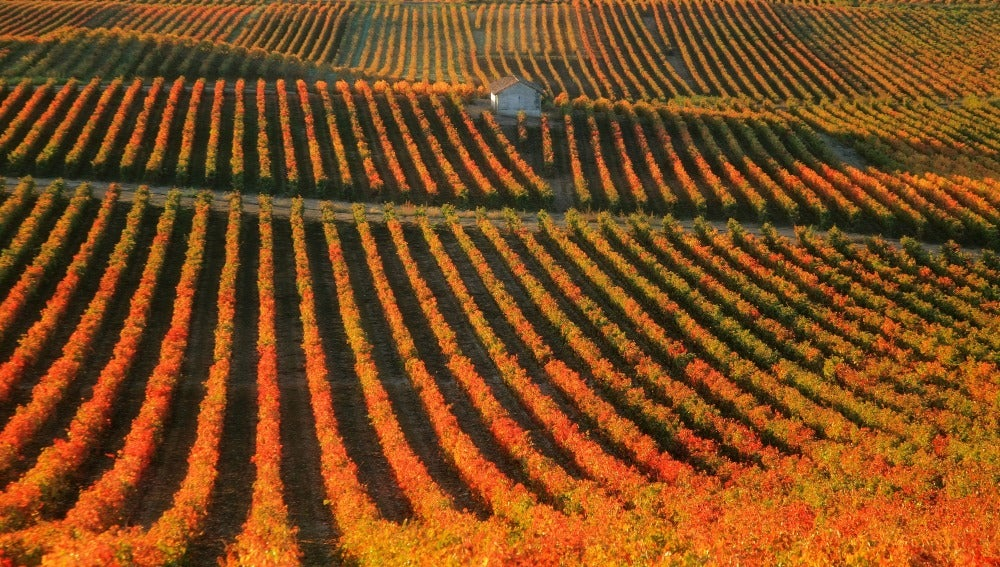 El impresionante paisaje de La Rioja en temporada de vendimia.