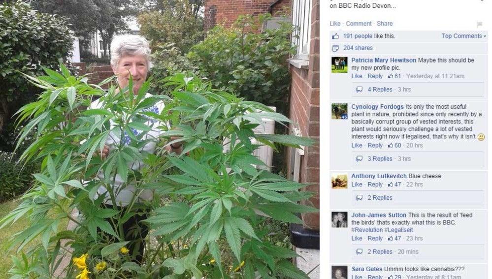La mujer subió una foto suya con la planta para resolver su duda