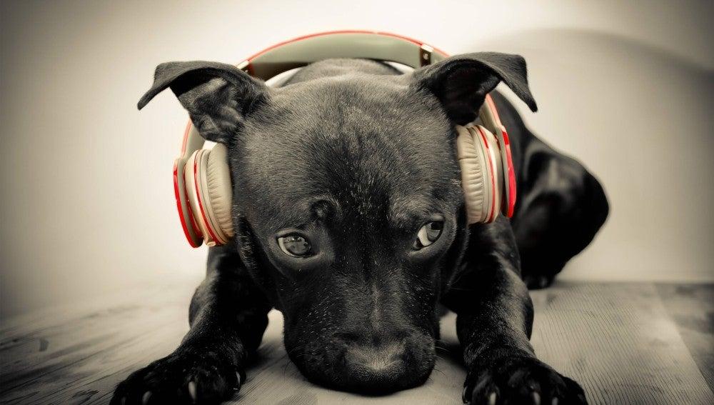 Un perro escuchando música