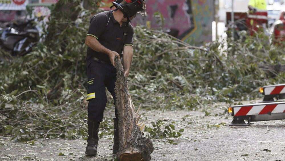 Cae la rama de un árbol en Madrid