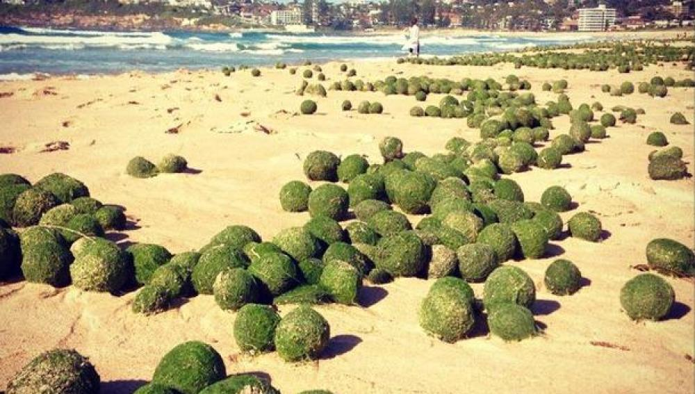 La playa de Dee Why Beach, cubierta de pelotas verdes