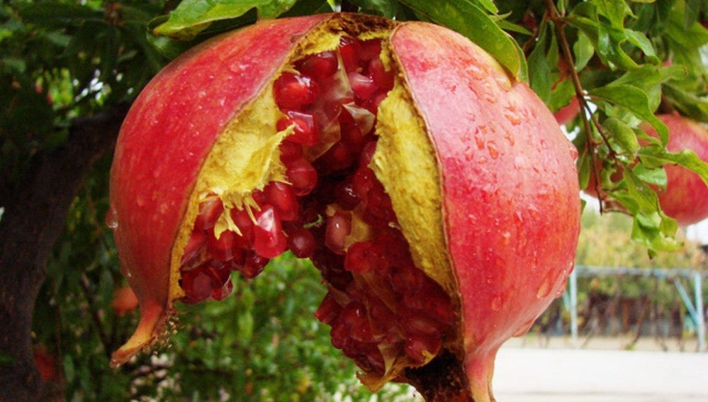 Fruto del granado.