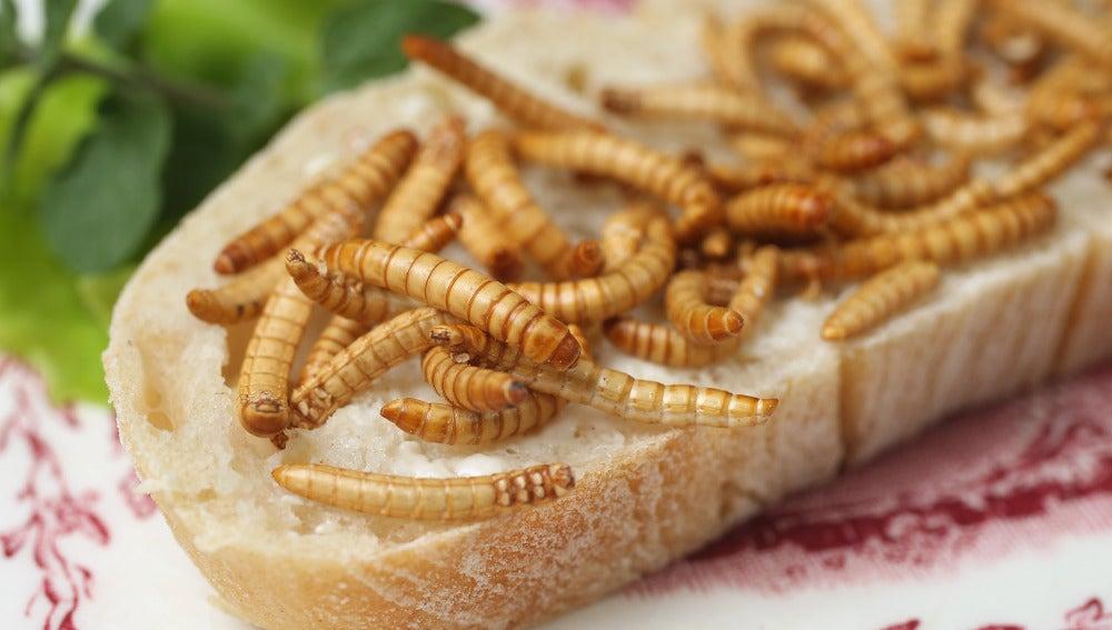 Hamburguesas de gusanos o aperitivos de larvas, ya en supermercados holandeses