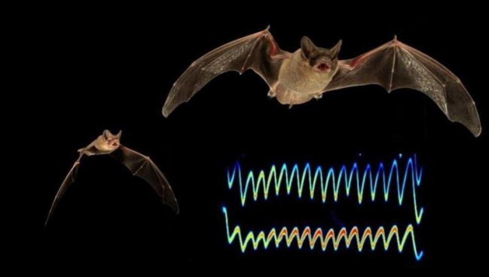 Los murciélagos intercambian interferencias para proteger su comida