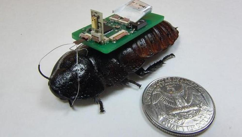 Cucarachas 'ciborg' para labores de rescate
