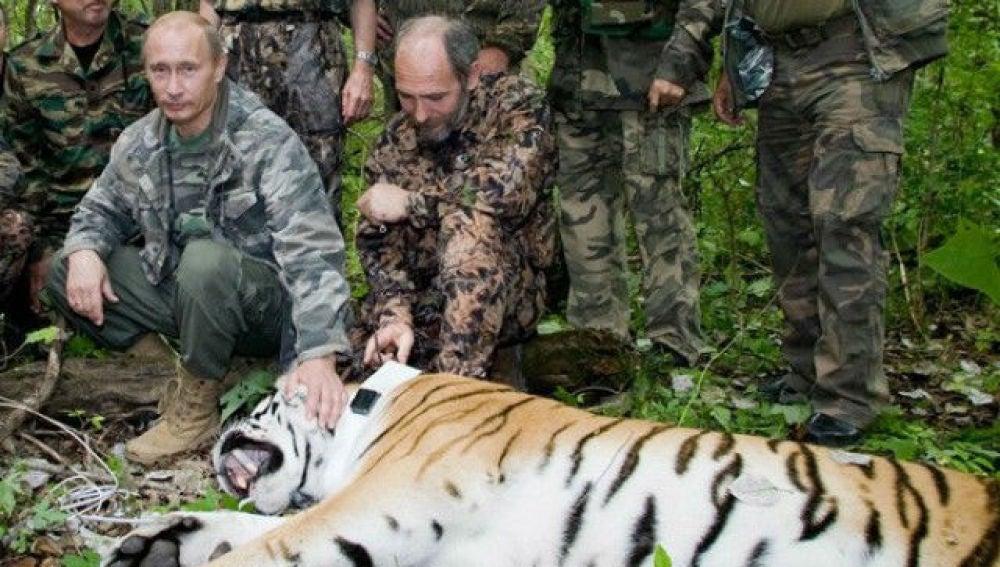 Putin junto a un tigre en una zona de Siberia