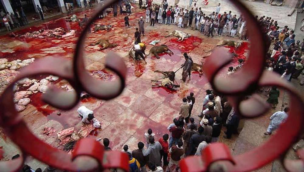 Matanza de animales en el Ghadimai Mela