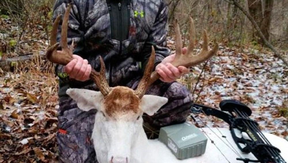 Amenazado de muerte por cazar a un ciervo albino