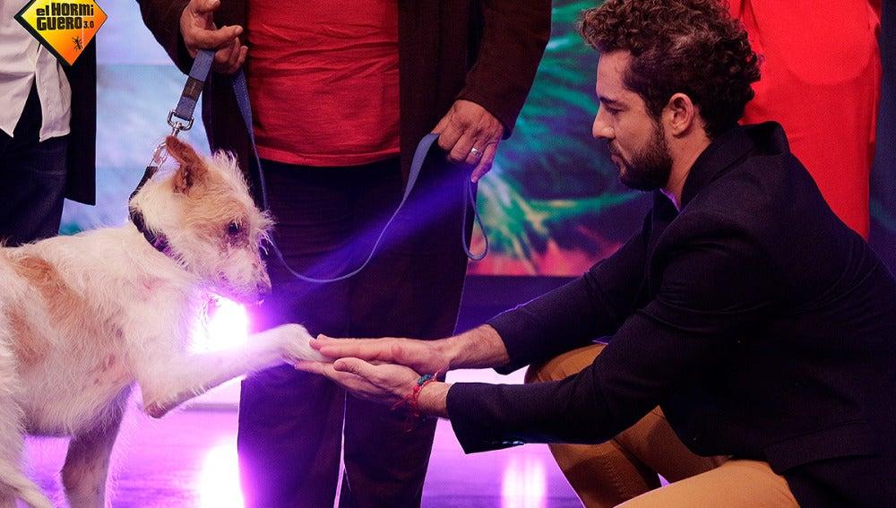 David Bisbal y el perro Frodo en El Hormiguero 3.0