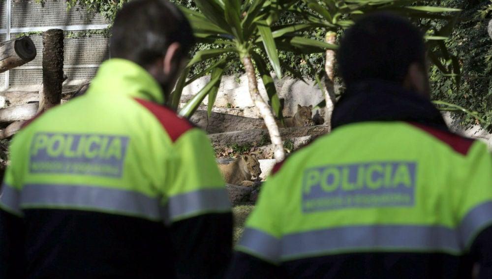 Ataque en el zoo de Barcelona