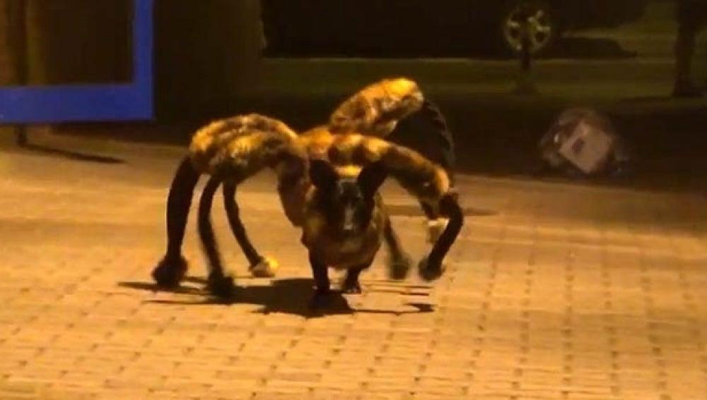 El perro araña