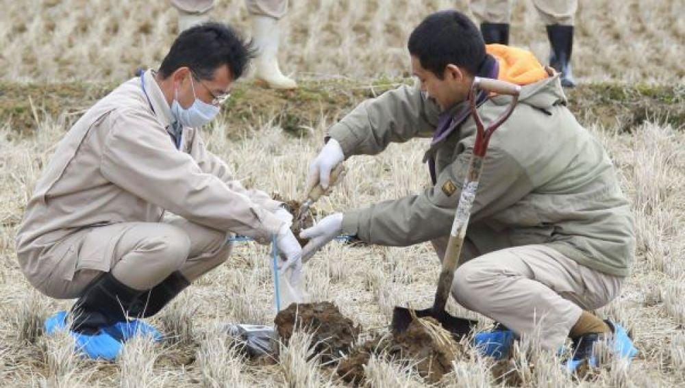 Dos operarios trabajan en un campo de arroz en Fukushima.