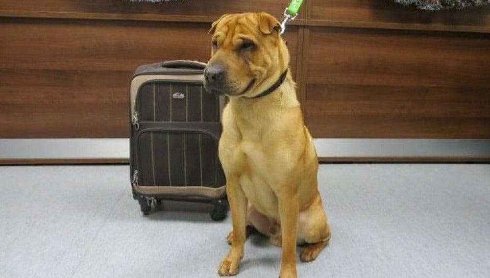 Kai, atado en una estación junto a una maleta