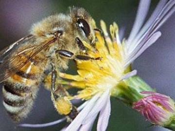 Prohibición de los plaguicidas peligrosos para las abejas