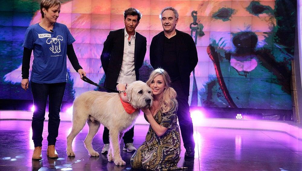 Coco el perro gigante en El Hormiguero 3.0