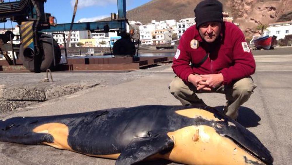 Orca varada en El Hierro