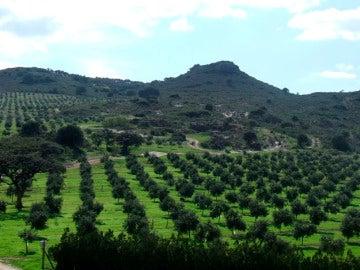 ¿Cómo se consigue el mejor aceite de oliva del mundo?