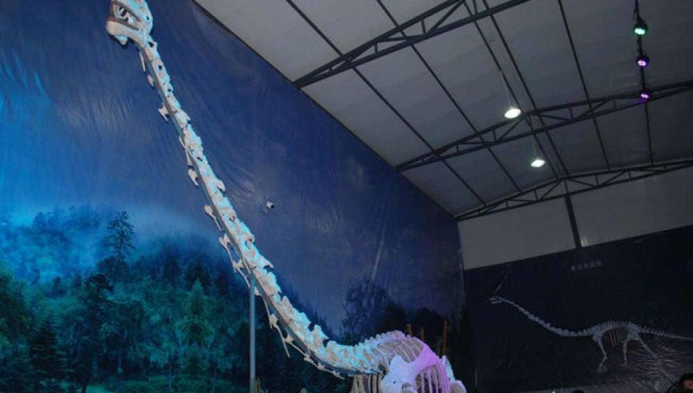 Reconstrucción del 'dragón de Qijianglong'