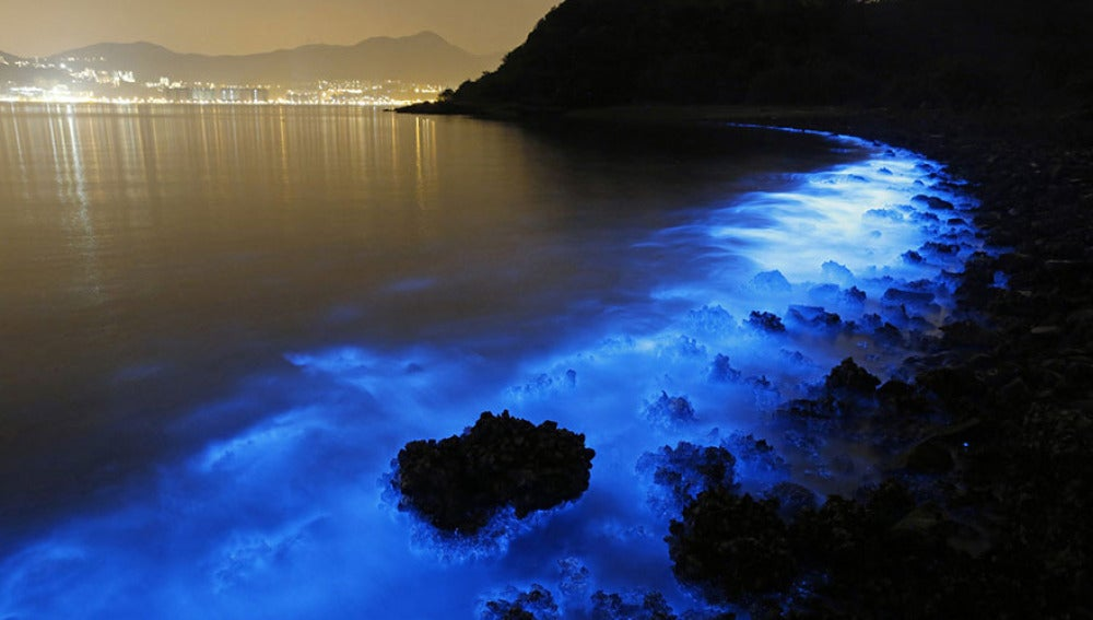 Un resplandor azul fluorescente en las costas de Hong Kong