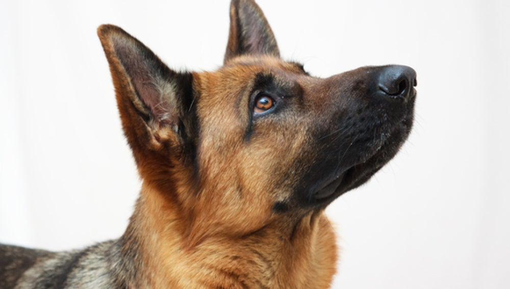 El perro reconoce tus gestos