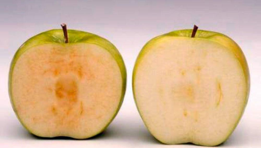 Una manzana normal y la variedad 'ártica'