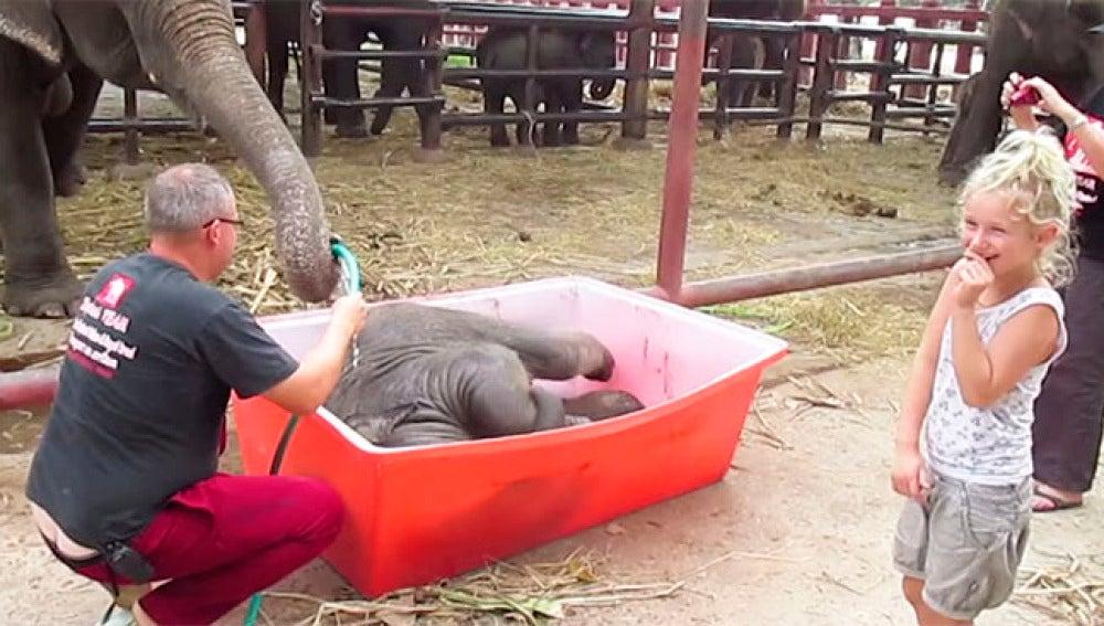 Un momento del divertido baño del elefante.