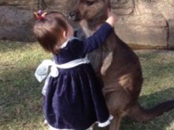 Una madre graba el momento en que su hija y un canguro se hacen amigos