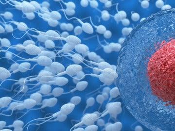 Estudio fertilidad masculina