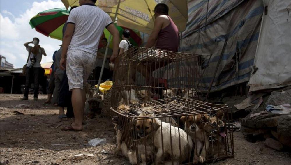 Una jaula llena de perros listos para ser vendidos en un mercado