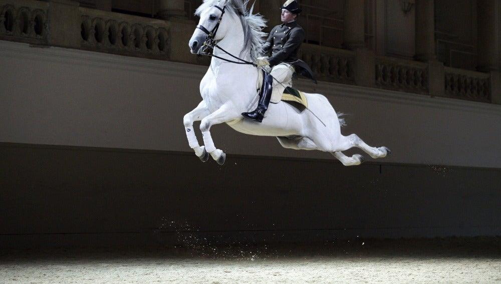 Un caballo saltarín (23-06-2015)