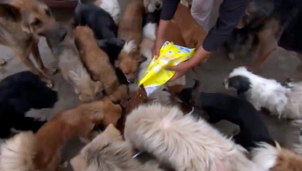 Todos los perros salvados