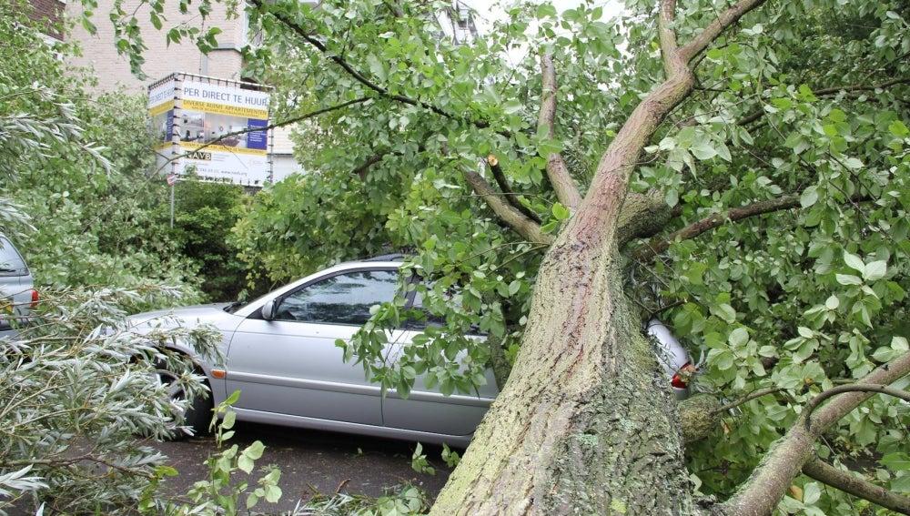 Un árbol caído sobre un coche en Holanda
