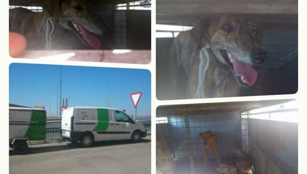 Iban a ser sacrificados en las instalaciones del zoosanitario de Linares