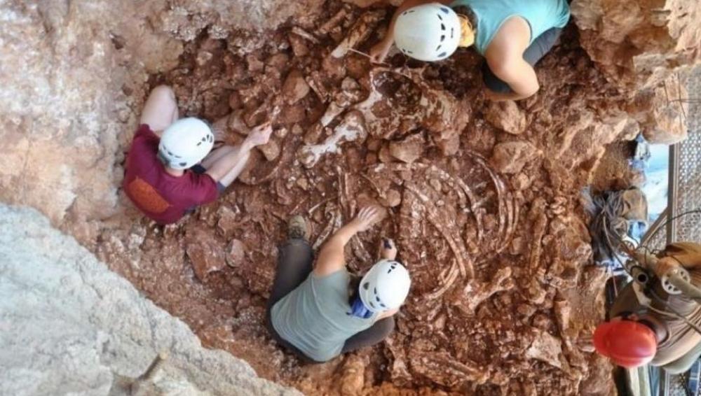 Trabajos arqueológicos en la Cueva de los Rinocerontes