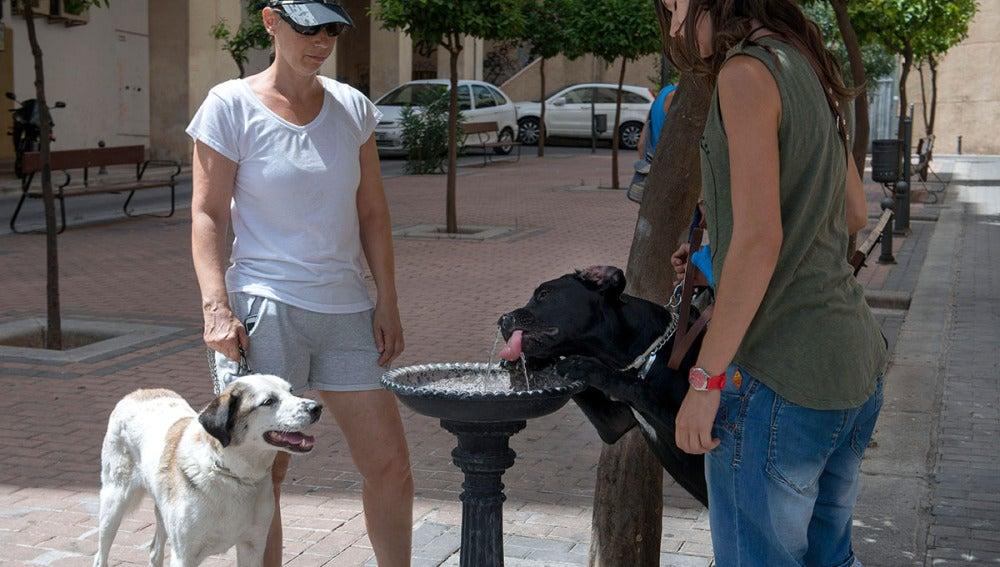 Dos personas dan de beber a sus perros en una fuente
